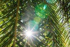 Zon die door palmbladeren glanst Royalty-vrije Stock Afbeeldingen