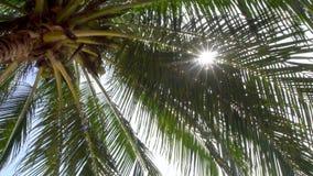 Zon die door palmbladeren glanst stock videobeelden