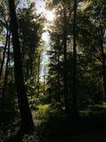 Zon die door treetops glanzen stock foto