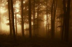 Zon die in een donker bos met mist in de herfst toenemen royalty-vrije stock foto
