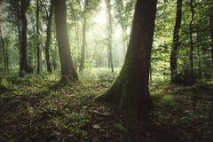 Zon die in groen de zomerbos glanzen stock afbeeldingen