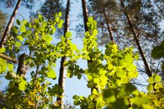 Zon die groene bladeren in de lente verlichten Stock Fotografie