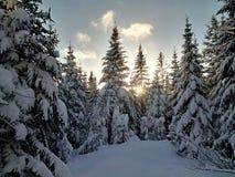 Zon die hoewel sneeuw geladen bomen gluren Stock Foto