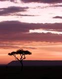 Zon die in masai mara plaatst Royalty-vrije Stock Afbeeldingen