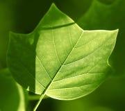 Zon die op een Groen blad glanzen vector illustratie