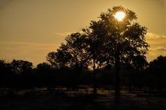 Zon die op lagere zambezi plaatst Stock Afbeeldingen