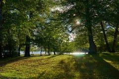 Zon die tussen bomen op een park en bomen met lange schaduwen glanzen stock foto