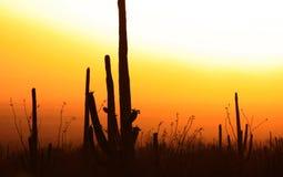 Zon die in Woestijn wordt geplaatst Stock Foto