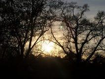Zon door de bomen Stock Foto