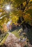 Zon door de herfstbladeren met bosachtergrond Royalty-vrije Stock Afbeeldingen