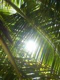 Zon door de palm Royalty-vrije Stock Foto