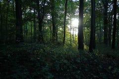 Zon door het bos wordt gevangen dat Stock Fotografie