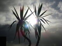 Zon door Palmen bij Clarks-Strand stock afbeelding