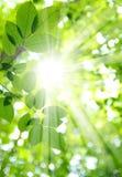 Zon en bladeren royalty-vrije stock afbeelding