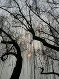 Zon en bomen Royalty-vrije Stock Afbeeldingen
