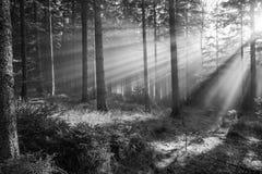 Zon en mist Stock Afbeeldingen