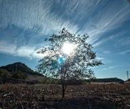 Zon en schaduw onder een boom Stock Afbeelding