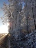 Zon en Sneeuw Stock Fotografie