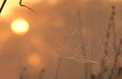 Zon en spiderweb Royalty-vrije Stock Afbeeldingen