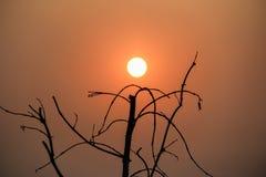 Zon en takken bij zonsondergang Royalty-vrije Stock Fotografie