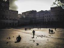 Zon en Vogels in Siena stock foto