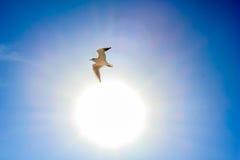 Zon en witte vogel in de hemel Stock Fotografie