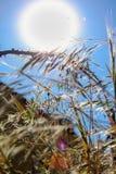 Zon, gebrek aan water, droogte en installaties stock fotografie