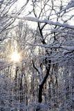 Zon glanzende throug sneeuw behandelde bomen Royalty-vrije Stock Afbeelding