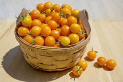 Zon Gouden Cherry Tomatoes in Mand royalty-vrije stock foto's