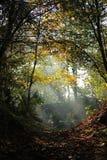 Zon in het bos Royalty-vrije Stock Afbeelding