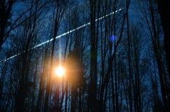 Zon in het bos Stock Afbeeldingen