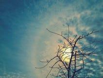 Zon het Een hoogtepunt bereiken achter Wolken en Boom Stock Fotografie