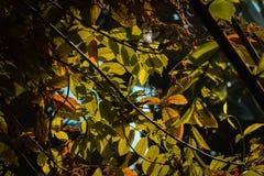 Zon het een hoogtepunt bereiken door de boombladeren in de tropische serre in Frederik Meijer Gardens stock foto's