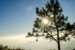 Zon het glanzen en mist op Berg Stock Fotografie
