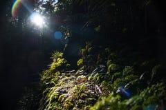Zon het lichte stromen door de bomen royalty-vrije stock fotografie