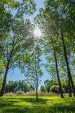 Zon in het midden door de bomen royalty-vrije stock afbeelding