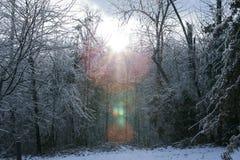 Zon in het Sneeuwbos Stock Afbeeldingen