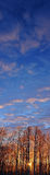 Zon in Ijzig bomen Verticaal Panorama Royalty-vrije Stock Foto's