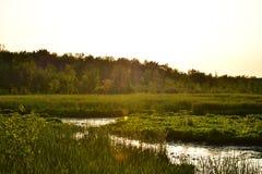 Zon in Marsh During Dusk Or Dawn Stock Afbeeldingen
