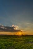 Zon met lange oranje stralen over de weide met gras Stock Afbeeldingen