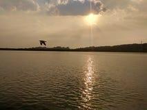 zon met rivier en vogel wordt geplaatst die Stock Foto's