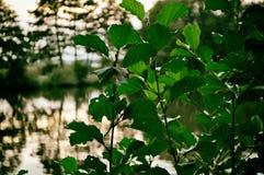 Zon, mooie boom, vogel, horizon, meer, landschap, aard, Duitsland stock foto's