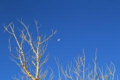 Zon omhoog en de nog hoge maan Royalty-vrije Stock Fotografie