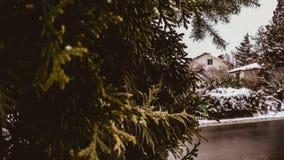 Zon op de winter met groen groot de winterhout stock foto's