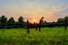 Zon op het prikkeldraad met zonsonderganghemel Stock Foto's