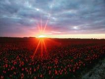 zon-op stock afbeelding