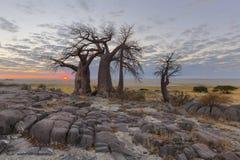 Zon op horison bij de baobabs royalty-vrije stock foto's