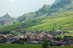 Zon op wijngaarden: Zwitserland Stock Foto's