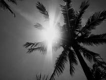 Zon over op het eiland Koh Samui Thailand van het palmparadijs Stock Foto's