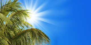 Zon, palm en blauwe hemel Stock Afbeelding